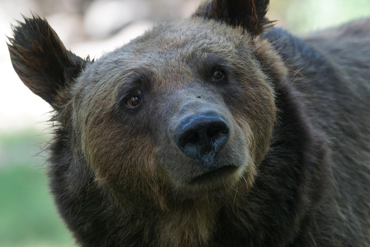 Beheer de beer